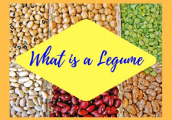 what is a legume