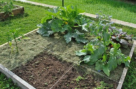 How to Layout a Vegetable Garden